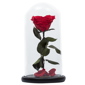 Red Heart Shape Preserved Rose | Beauty and The Beast Glass Dome