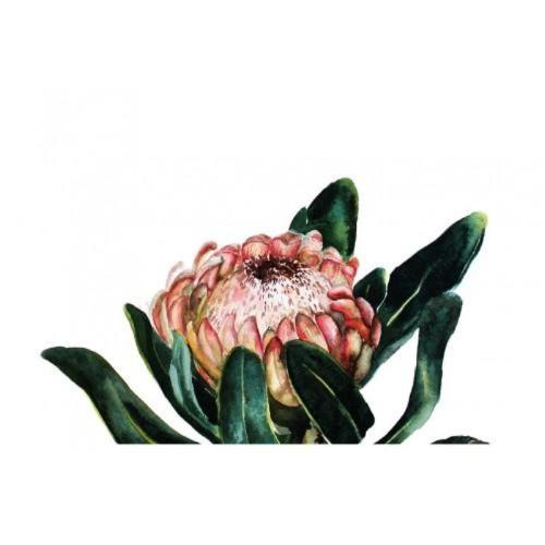 Blooming Protea Canvas Print