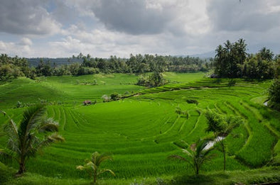 BALI - Islands of Gods.