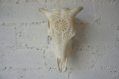 Real Cow Skull Carving 002