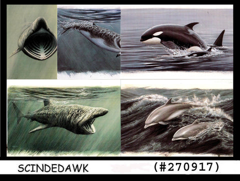 ISLE OF MAN 1998 YEAR OF THE OCEAN -  FISH - WHALES - SHARKS 5 Picture postcards