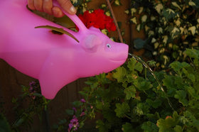 Pink Flying Pig Kids Watering Can