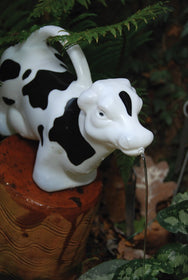 Watering Can COW