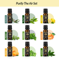 Purify The Air Oil Set Eucalyptus Tea Tree Lemon Thyme Coriander Mandarin Orange Marjoram Camphor - MoodEssentialOils.co.uk