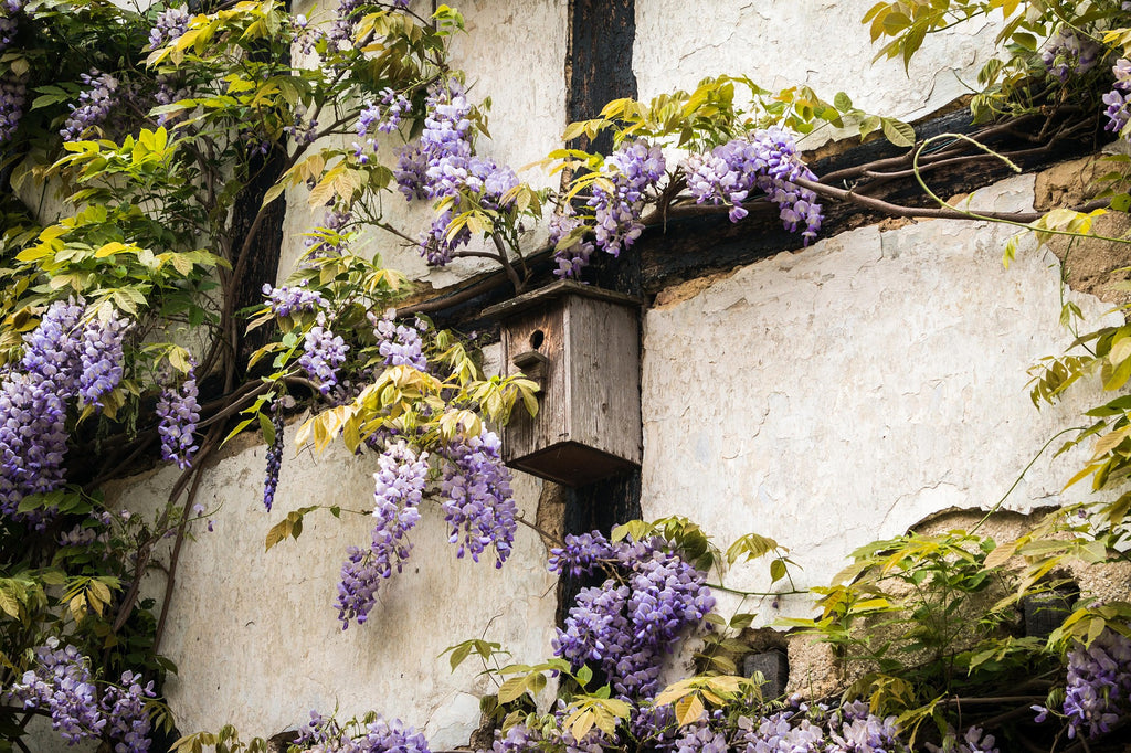 INSPIRATION BEHIND: Wisteria & Sunshine