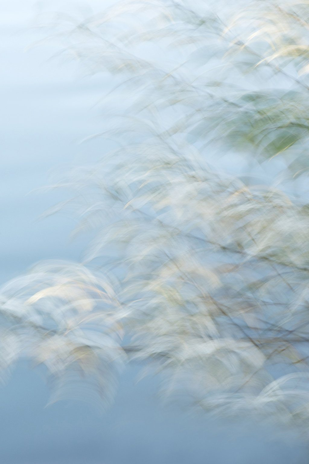 impressionistic nature photography for sale