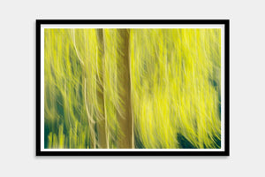 tree fine art framed