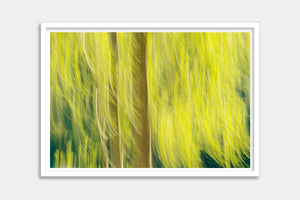 framed abstract trees