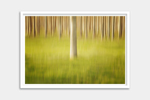modern trees framed fine art
