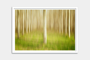 modern framed tree prints