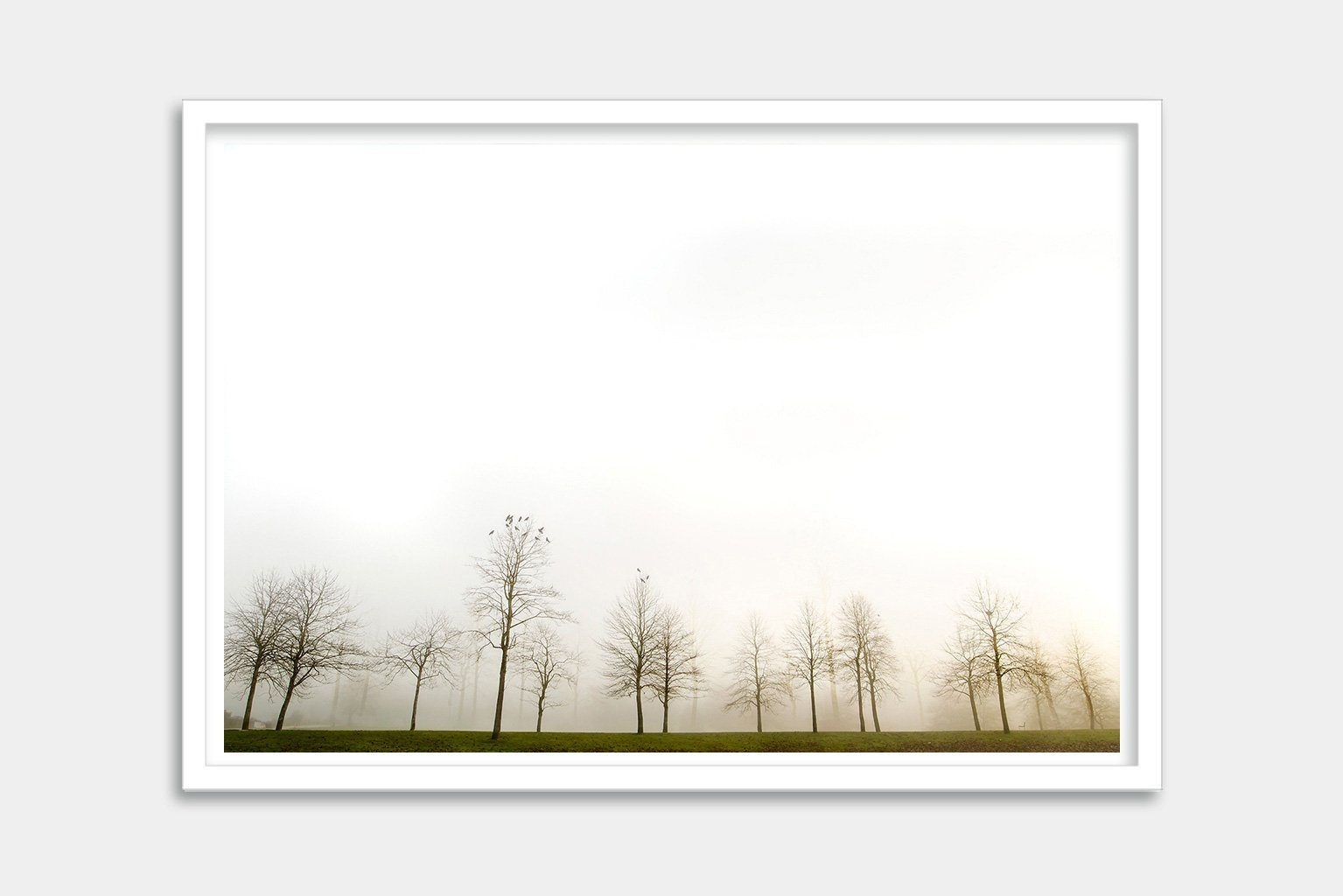 foggy tree art