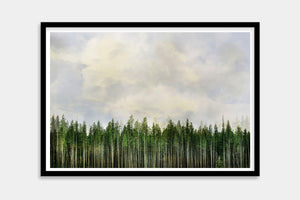 special forest framed art