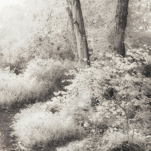 black and white forest art
