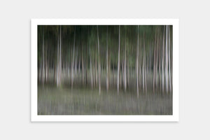dark trees art buy online
