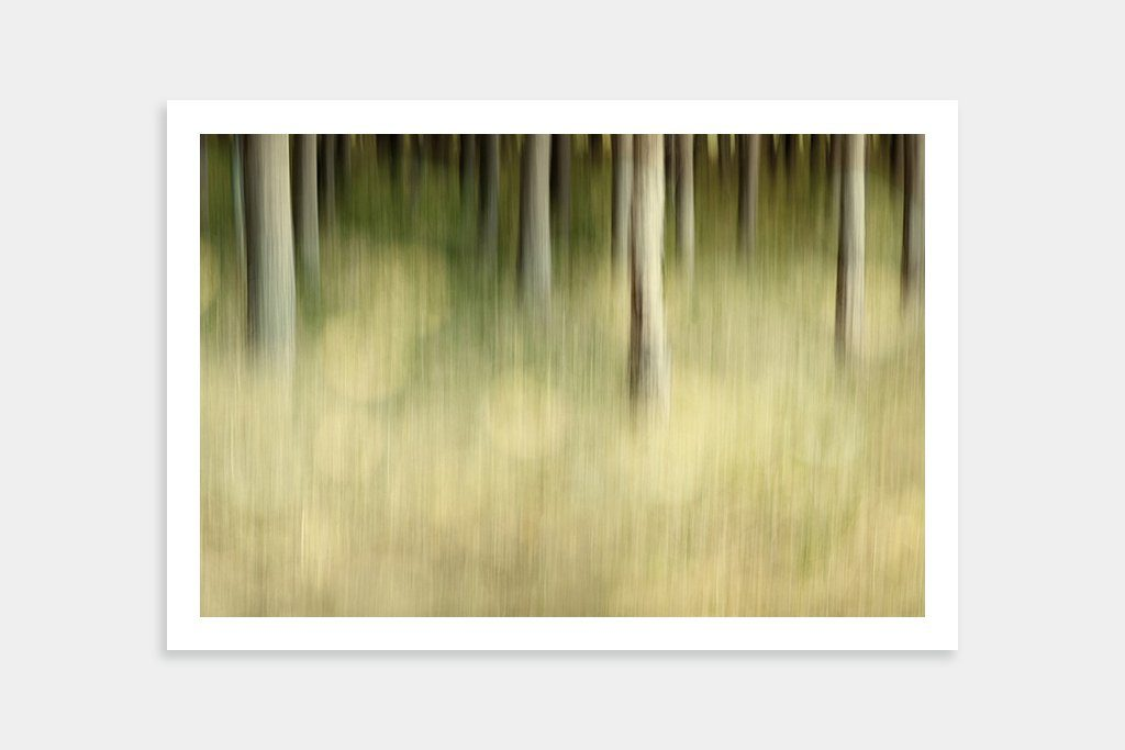 fine art forest artwork