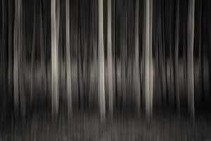 dark forest artwork