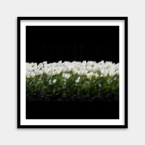 painting flowers framed art