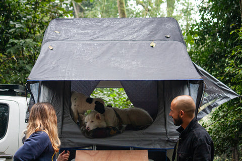 How To Get Your Dog Into Your Roof Top Tent