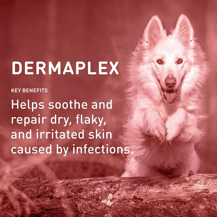 Dermaplex Advanced Skin and Coat Repair Shampoo - With Tea Tree Oil & Aloe Vera [product_type - IVS Pets International Veterinary Sciences data-image-id=