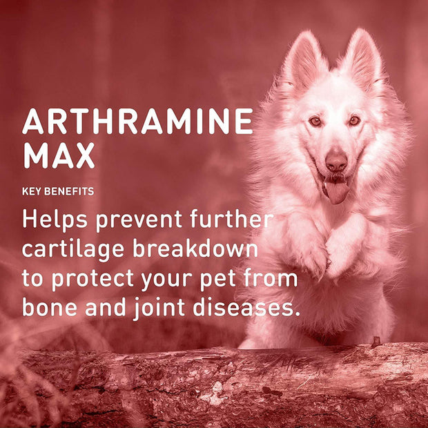 Arthramine® MAX Joint Care MSM + OMEGA 3 + Vitamin C Chewable Tablet For Dogs (60 Count) data-image-id=