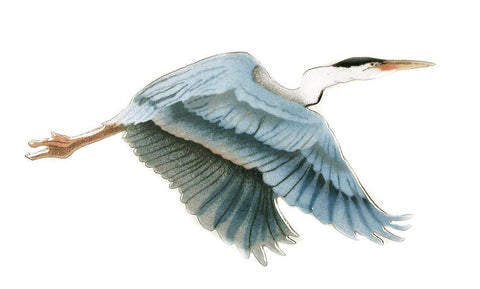 SMALL BLUE HERON ALOFT
