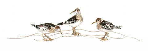 BIG SANDPIPERS THREE