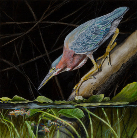 GREEN HERON AND DARTERS