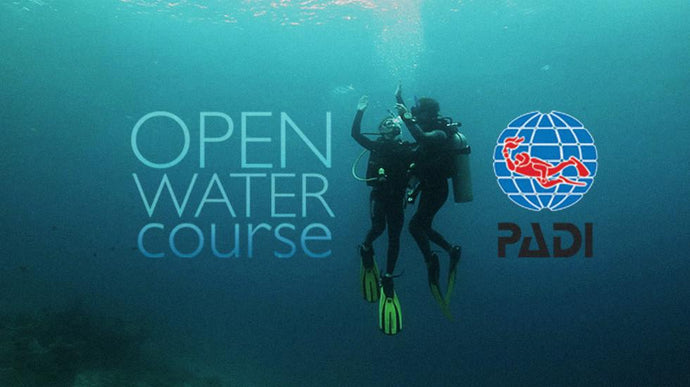 Complete PADI Open Water Course Academics with academics, pool, and ocean/lake checkout dives