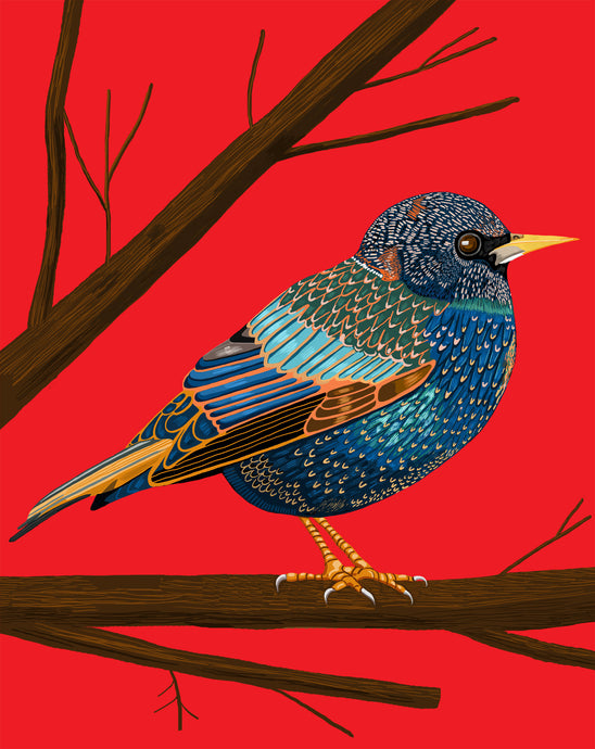 Starling ~~ Archival Print