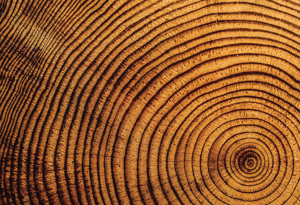 Trees in colder areas have slower growth rates and thus, they have more rings per given length of a cross section.