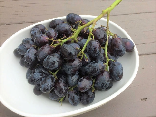 AUS Autumn Royal/Adora Seedless Black Grapes