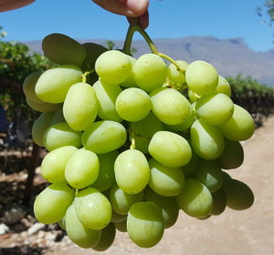 USA Crunchy Seedless Green Grapes