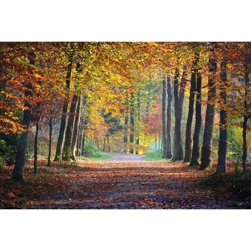 Autumn Trees Nature Wall Mural - Premium-Creative Wallpaper