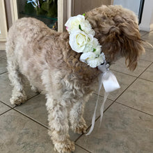 dog flower crown dog flower collar australia perth melbourne sydney dog wedding accessory puppy flower crown puppy flower collar white dog flower crown dog wedding accessories perth dog flower crown perth wa
