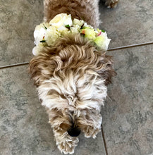 dog flower crown dog flower collar australia perth melbourne sydney dog wedding accessory puppy flower crown puppy flower collar white dog flower crown dog wedding accessories perth