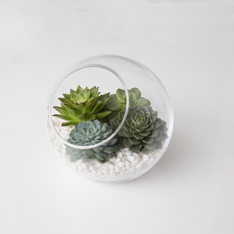 Sleek Succulents Bowl