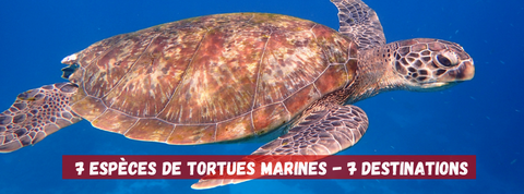 7 tortues marines