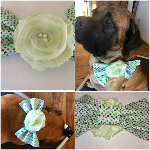 Girly Collar/Harness Girly Bow