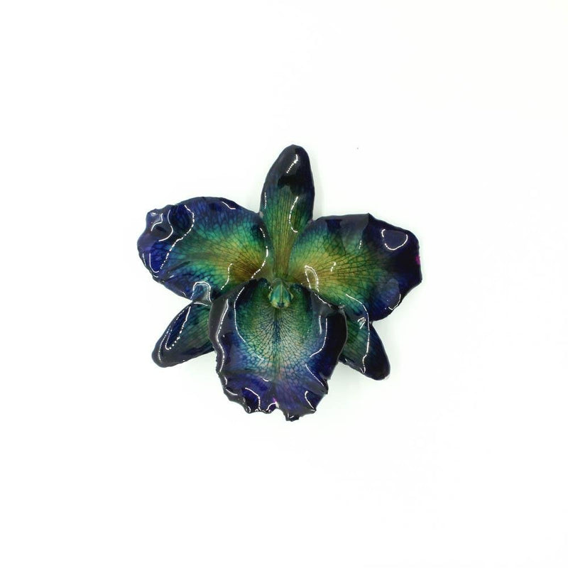 Large Real Cattelya Orchid Hair Clip - Devi & Co