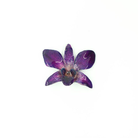 Red PAPHIOPEDILUM Bellatulum Real Orchid Hair Pin