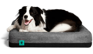 Performance Dog Bed