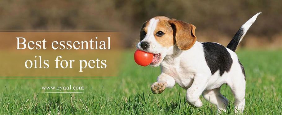 Best Essential Oils for Pets