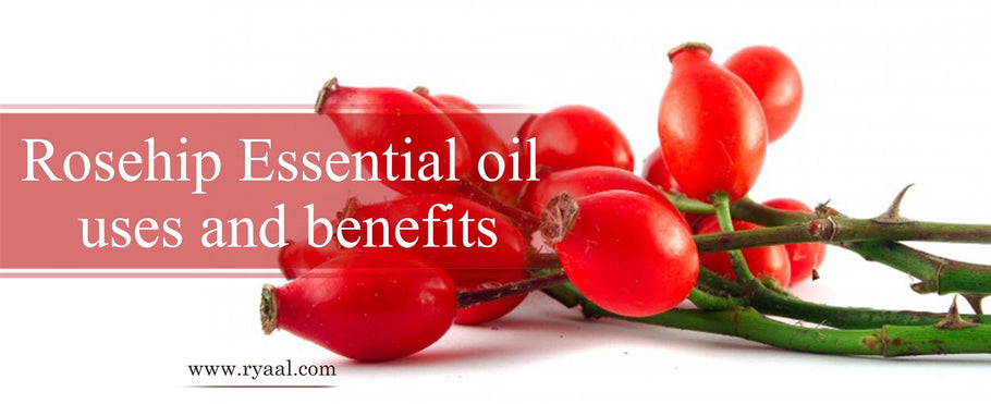 Rosehip Essential Oil Uses and Benefits