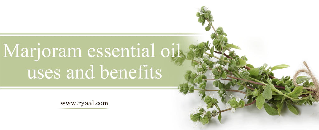 marjoram-essential-oil-uses-and-benefits