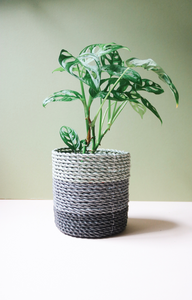 #FlowerCrushFriday - How to care for your house plants