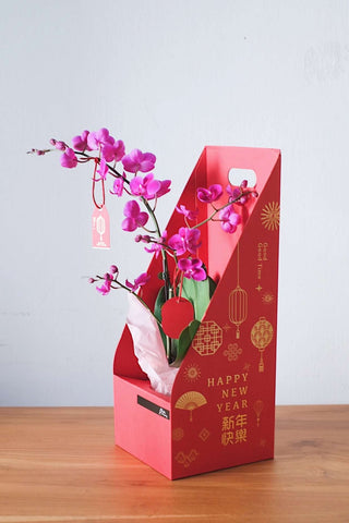 CNY 2020 - Phalenopsis Orchid in Carrier Box