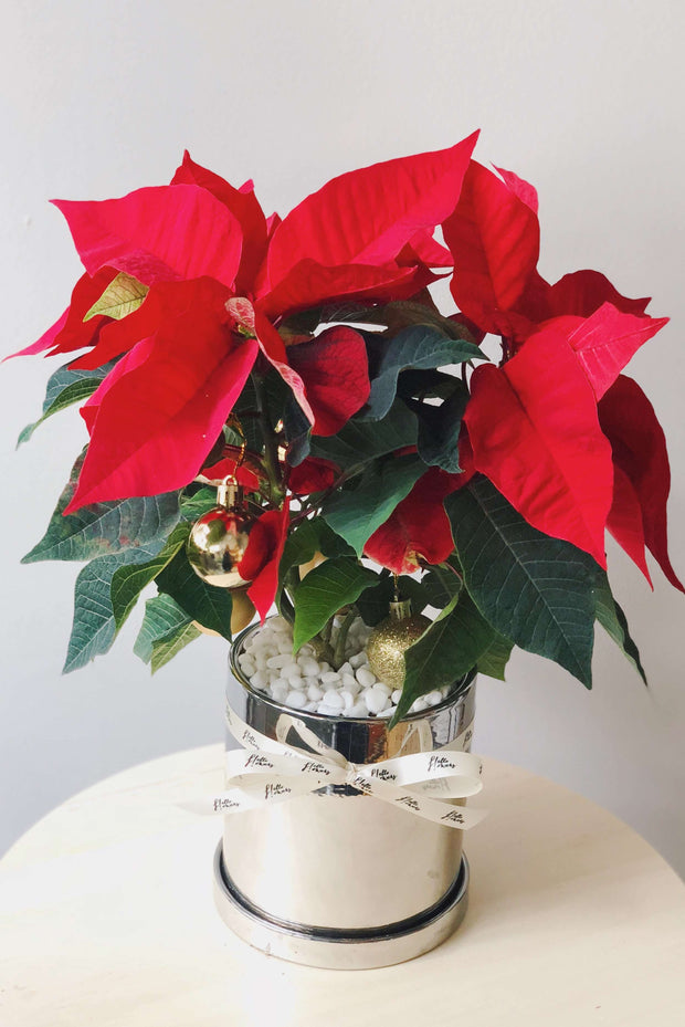 Hello Christmas! 18 | Poinsettias & Baubles! - hello flowers!