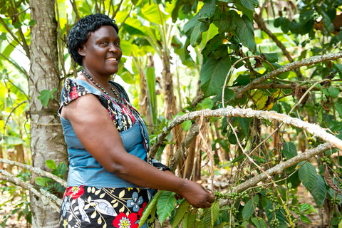 Olivia Mwombeki, Fairtrade coffee farmer with coffee plant