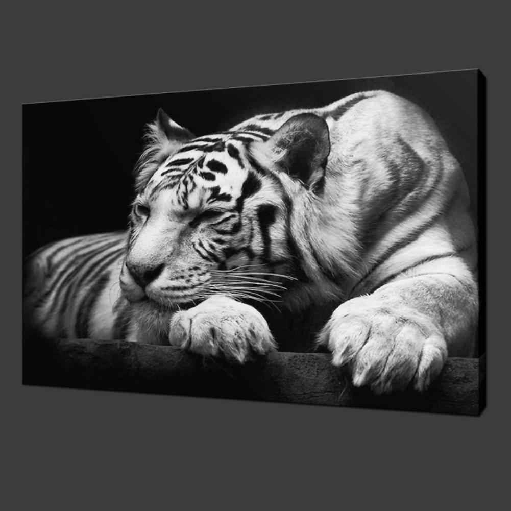 Black and White Tiger - Gaia-Stock.com