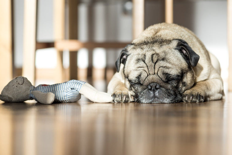 What Causes Snoring In Dogs